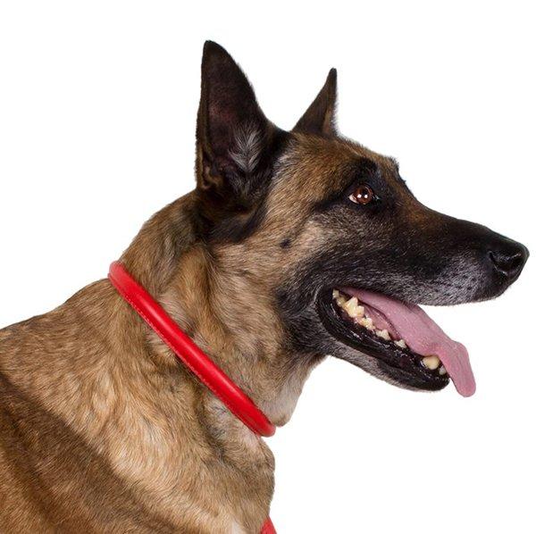 collardirect rolled leather dog collar - best rolled leather dog collars