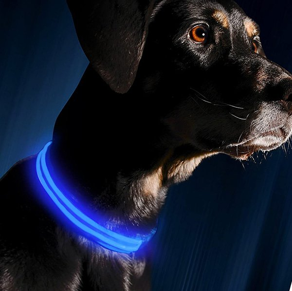 illumiseen led dog collar - best led dog collar