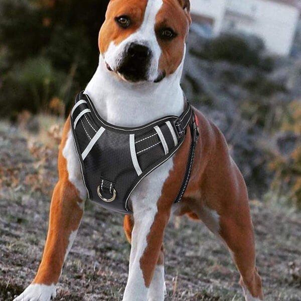 babyltrl big dog harness no pull - best dog harness