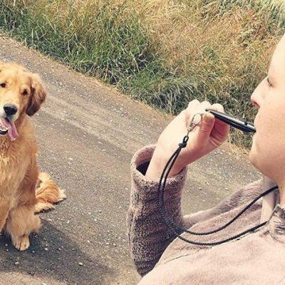 acme 210 orange - best dog whistle