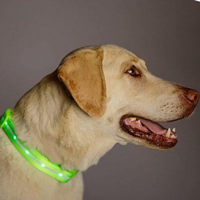 blazin safety led dog collar - best led dog collar