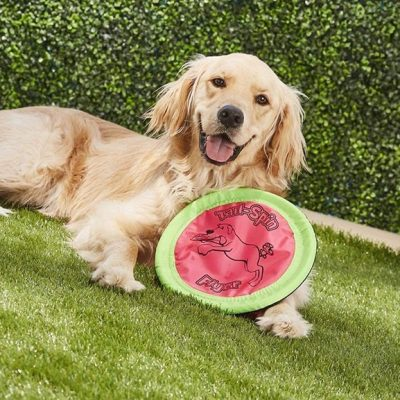 booda tail-spin flyer - best dog frisbee