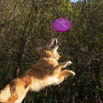 hyper pet flippy flopper dog frisbee interactive dog toys - best dog frisbee