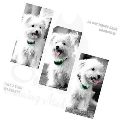 k9 training made easy bark collar for small dog - best bark collar for small dogs