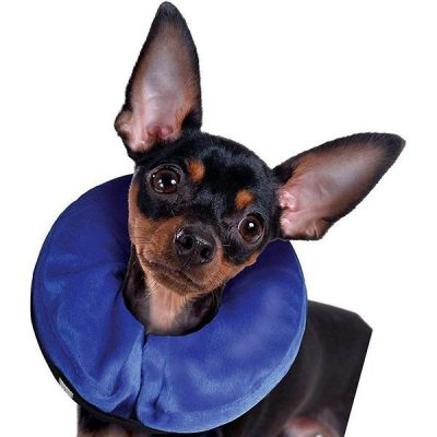 kong cloud e-collar for cats and dogs - best inflatable dog collar