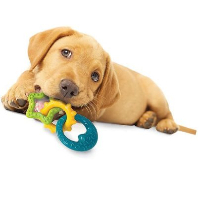 nylabone puppy teething chew toys for dogs - best chew toys for puppies