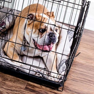 paws & pals dog crate double-door folding metal - best dog crate