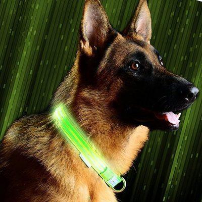 pet industries metal buckle led dog collar - best led dog collar