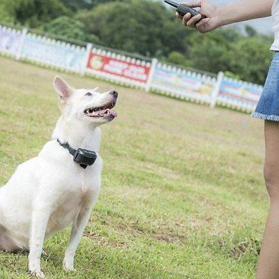 pet union pt0z1 premium dog training shock collar - best dog training collar