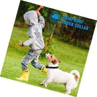 petrainer pet998drb1 dog training collar - best vibrating dog collar