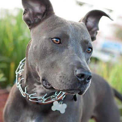 pettom dog prong training chain collar - best chain dog collar