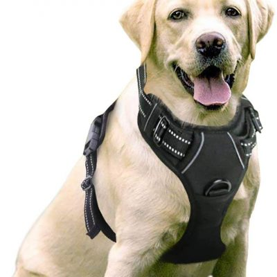 rabbitgoo no-pull pet harness - best no pull dog harness