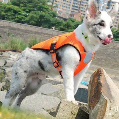 smartelf dog cooling vest - best dog cooling vest