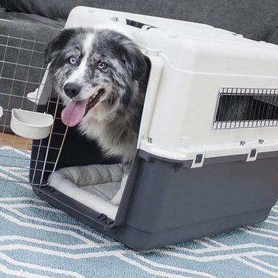 sportpet designs plastic kennels - best large dog traveling crate