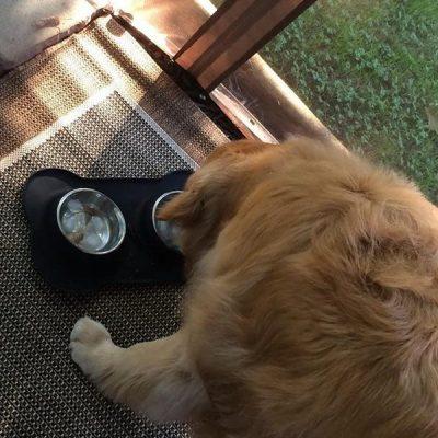 urpower dog bowls stainless steel dog bowl - best stainless steel dog bowls